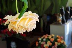 Организация похорон в Нарве, Нарва-Йыесуу, Силламяэ, Йыхви, Эстония